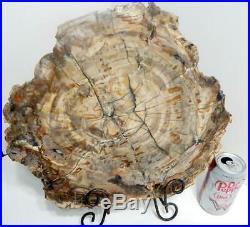 Large 14.5 9+ lb Polished Petrified Wood Slice Slab Madagascar WithStand C609