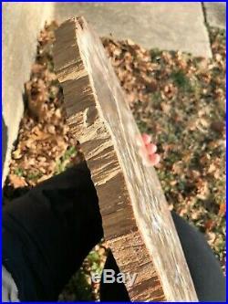 Large 14.5 St. Johns, Arizona Petrified Wood
