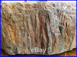 Large Arizona Painted Desert Petrified Wood Red Round 137 LBS 21X16X5 Bark Sides