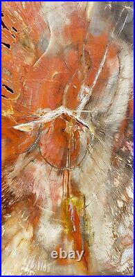 Large Beautiful 20 Inch Fossil Petrified Wood Red Rainbow Round End Cut Arizona