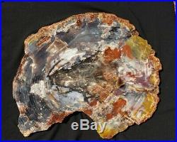 Large Beautiful 26.5 Inch Fossil Petrified Wood Red Rainbow Round Arizona