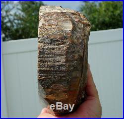 Large Fossil Petrified Wood Crystal Quartz Display Stone Beautiful Colors