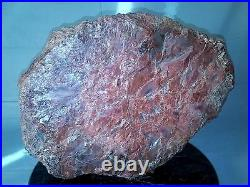 Large Rough Polished Arizona Petrified Wood Thick 3 Inch Slab Beautiful Color