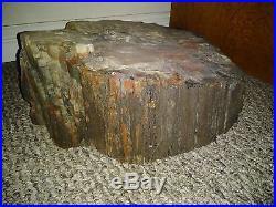 Large Slice of Polished Petrified Wood 17 HEAVY