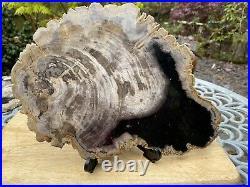 Large Sumatran Fossilised Petrified Wood 1772g / Serenity Grounding Wisdom 3