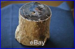 McDermitt, Oregon Petrified Wood Limb, Dug at Airport, Cut & Polished