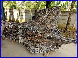 Museum Collection 11 Ton Full Polish Indonesia Hard Tropical Petrified Wood Tree