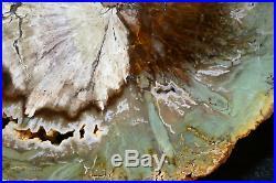 NICE Zimbabwe Woodworthia round! GREENTop Shelf