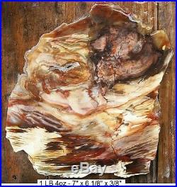 Nevada Cherry Creek Agatized Petrified Wood Slab Stunning Colors And Grains