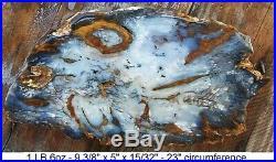 Nevada Hubbard Basin Agatized Blue Petrified Wood Full Round Slab Gorgeous