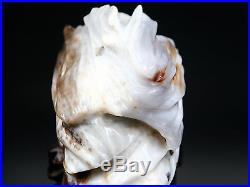 PETRIFIED WOOD FOSSIL Polish Crystal Gem Quality Display Specimen Bonsai Suiseki