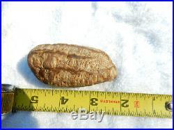 Petrified Agatized Seed Pod, RARE