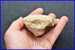 Petrified Cycad Morrison Formation Henry Mountains Utah Ex Hatch Collection