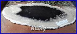 Petrified Palm Wood Texas Polished Slab