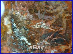 Petrified Wood Ambilobe Madagascar Polished Both Sides