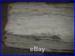 Petrified Wood Fossil