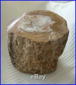 Petrified Wood, Fossil Wood Specimen, Madagascar. Large 3.97 kg