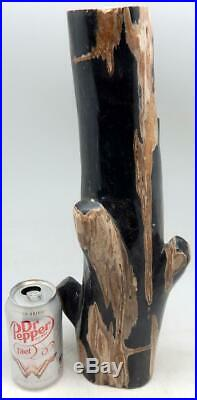 Petrified Wood Large Branch Limb Full Polish 16 14 lbs. 11.2 ozs. E321