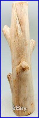 Petrified Wood Large Branch Limb Full Polish 16.25 10 lbs. 6.5 ozs. D321