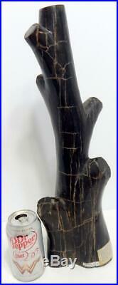 Petrified Wood Large Branch Limb Full Polish 18.5 12 lbs. 6.4 ozs. C429