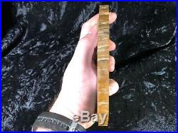 Petrified Wood Legume Mimosa Lufkin, Texas Yegua Formation 6.5x6