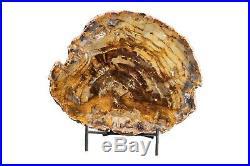 Petrified Wood Slab Pringle Flats Central Oregon 3 lbs 10 Oz