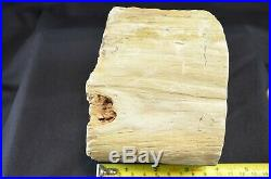 Petrified Wood, Small Round Log Zimbabwe, Africa 4x5 Face, 4lb 11oz