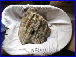 Petrified Wood Woodpecker Hole Fossil Tree Fluorescent Display Wyoming
