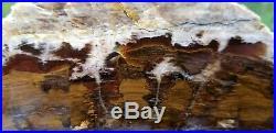 Petrified wood Limb Slab Tuscarora Nevada