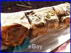 Petrified wood limb, Nevada 15 lbs