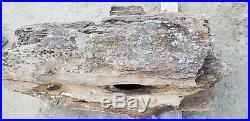 Petrified wood log raw