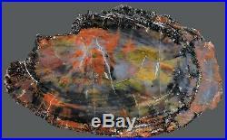 Petrified wood polished Arizona slab