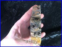 Polished Petrified Wood Araucaria Amarillo Texas Santa Rosa Fm Triassic 6.5x4