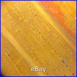 Polished Petrified Wood Oak Jasper Texas Catahoula Fm. 10x8.75