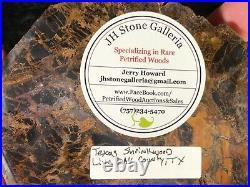 Polished Petrified Wood Shrinkwood Round Live Oak County, TX Miocene 5x4