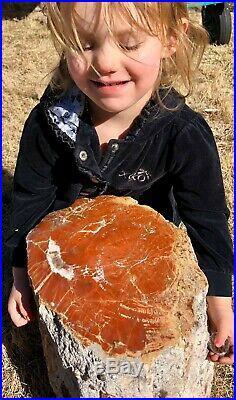 REILLYS ROCKS Arizona Petrified Wood With Vibrant Colors Contour Polished 98 Lb
