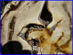 RFM PETRIFIED WOOD SWAMP CYPRESS Polished Full Round LOG SECTION Saddle Mt WA