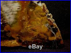 RW LARGE PETRIFIED WOOD ROUND from HUBBARD BASINMAGNIFICENT PIECE