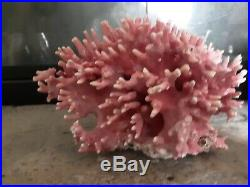 Rare Hydracoral Allopora Pink Coral from California