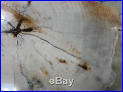 Rare Opalized Petrified Wood Cedar Fra Cristobal Range, New Mexico 8x7