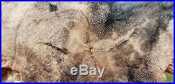 Rare Petrified Snakewood Mennegoxylon Texas