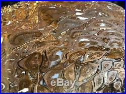 Rare Petrified Wood Australian PaleoOsmunda Upper Permian 6.25x4 Blackwater Fm