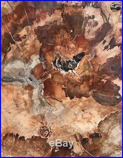 SALE Beautiful Extra Large Polished Petrified Wood Slab from Madagascar (08)