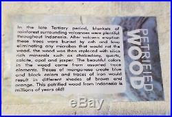 SALE Extra Large Polished Petrified Wood Bowl Slab from Indonesia 6lbs 8 oz