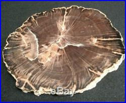 SCHILDERIA Arizona Petrified Wood Slab 7.25 x 6.25 Polished+++