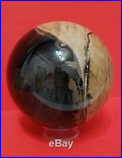 SYCAMORE PETRIFIED WOOD 4 3/4 SPHERE BALL AMAZING, RARE and a BEAUTY