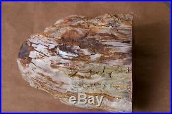 Saddle Mountain Petrified Wood LARGE Polished Slab Mattawa Excellent