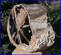 SiS 6 lb. PERFECT Eden Valley Wyoming Petrified Wood LOG