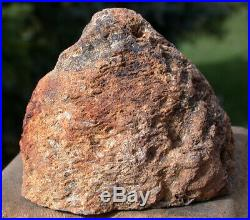 SiS AMAZINGLY BEAUTIFUL 1/2 lb. Blue & Black Petrified Pinecone Fossil Cone