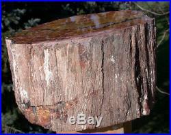 SiS BEAUTIFUL 15 lb. ARIZONA RAINBOW Petrified Wood Log AS GOOD AS THEY GET